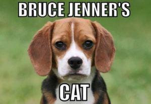 Bruce Jenner's Cat